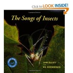 The Thrill of the Trill: Capturing an Insect Symphony