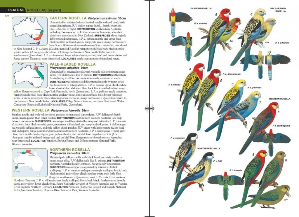 field book for australian scouting pdf