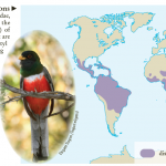 Review: The Atlas of Birds by Mike Unwin