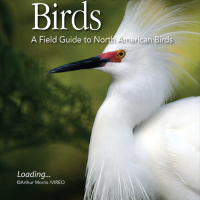 Review: Audubon Birds, now with more eBird