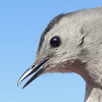 Bird Banding Highlights &#8211; March and early April 2012