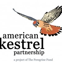 Do you want to help study and conserve American Kestrels? Join The Peregrine Fund's new American Kestrel Partnership!