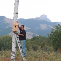 Mounting a kestrel box