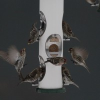 Common Redpolls fighting over the feeders. (Photo by Alex Lamoreaux)