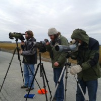 Josh, Alex, and Mark watching the distant godwit in frustration. (Photo by Tim Schreckengost)