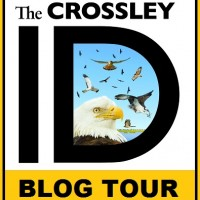 The Crossley Raptor ID Quiz