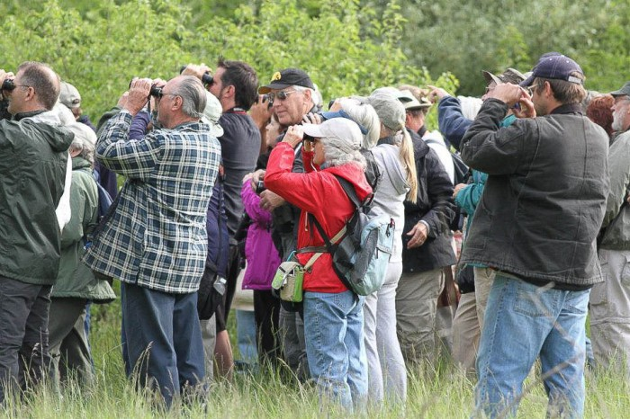 Birders observing Kirtland's Warbler -  Magee March, Ohio 2012