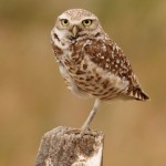 4 Day Birding Tour of Idaho