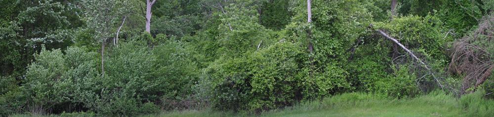 Brushy Habitat in Corey's Yard