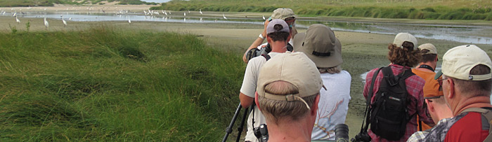 PSO Group looking at herons, shorebirds and many large Cottonmouths!! Photo by Andy McGann