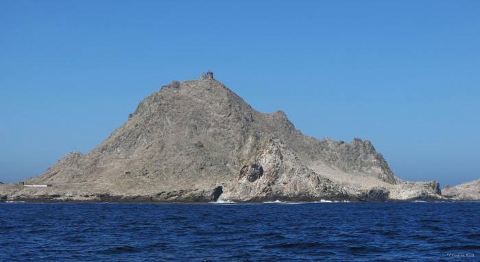 Figure 1. Southeast Farallon Island as seen from a sailboat just offshore.