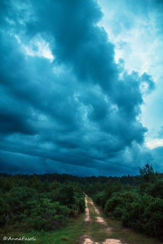 A front approaching in the evening in Ocala National Forest