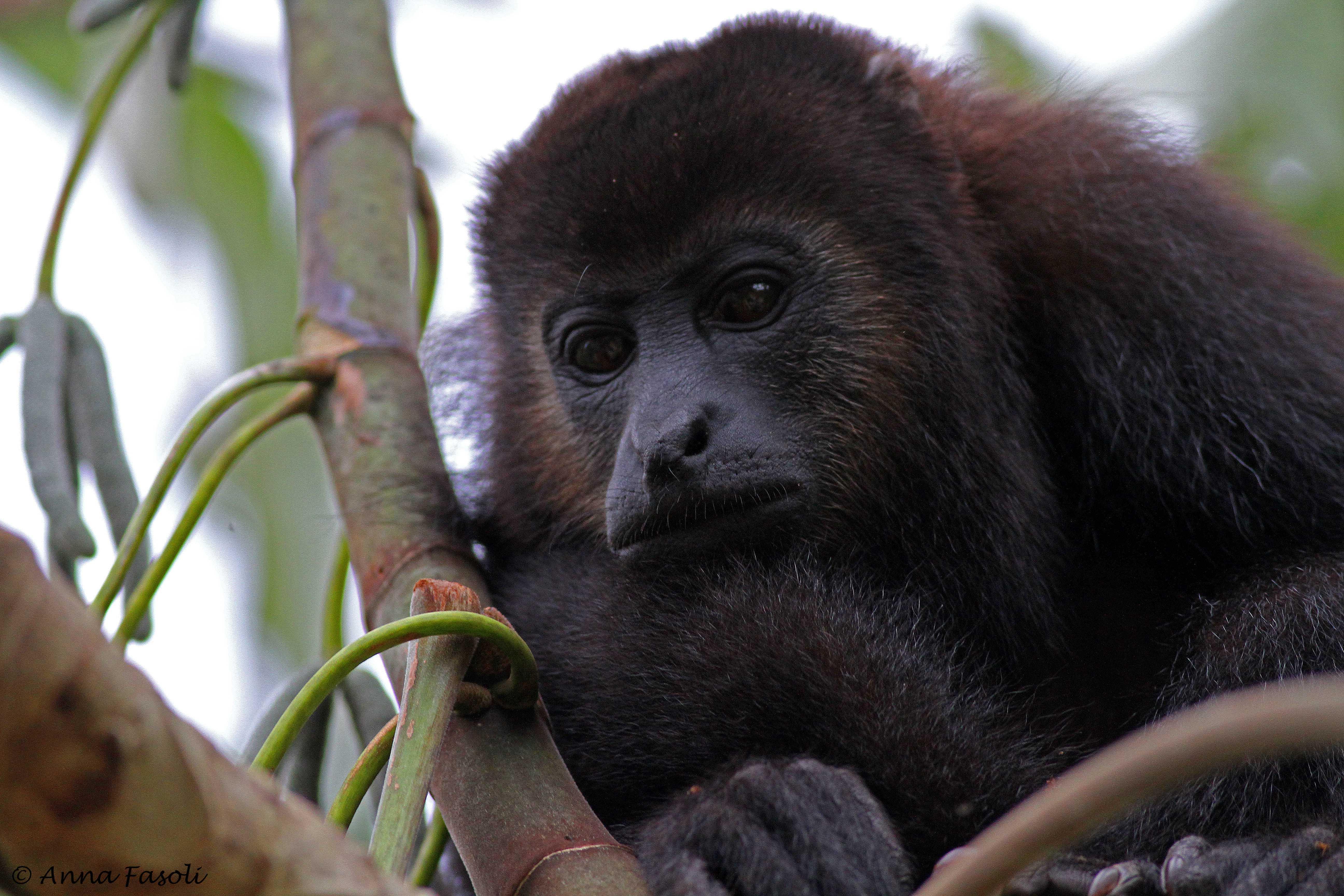 112214 owler Monkey 10