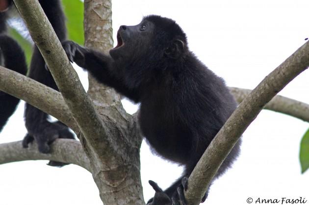 112214 owler Monkey 12