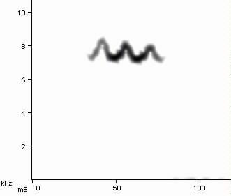Blackpoll Warbler spectrogram