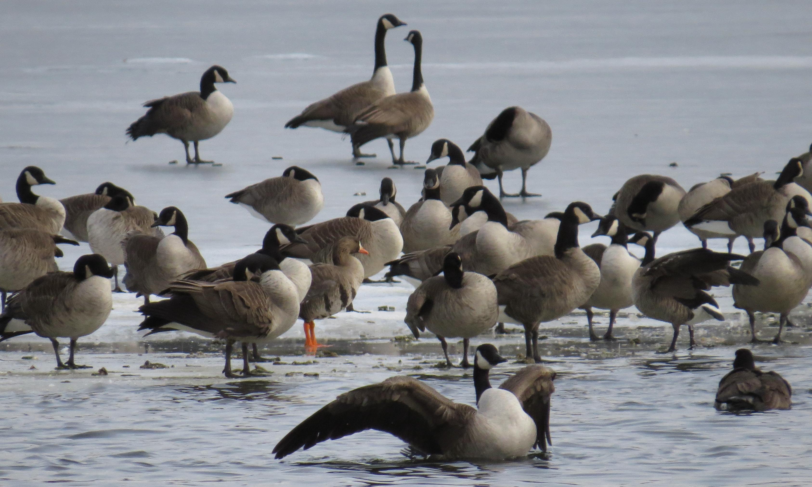 canada goose discounts to hershey