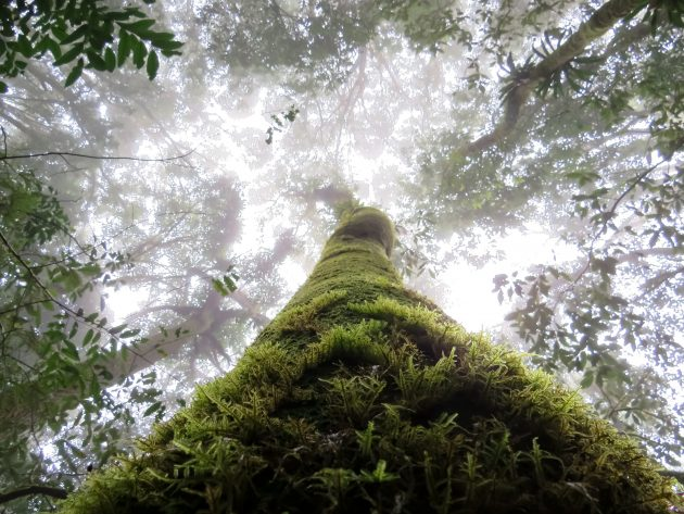 Looking into the canopy of LaTigra Cloudforest (Photo by Ian Gardner)